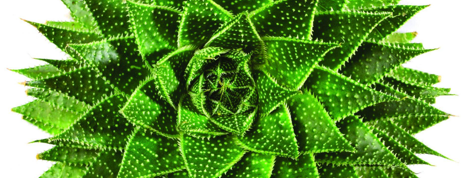 cropped-annie-plant-2.jpg